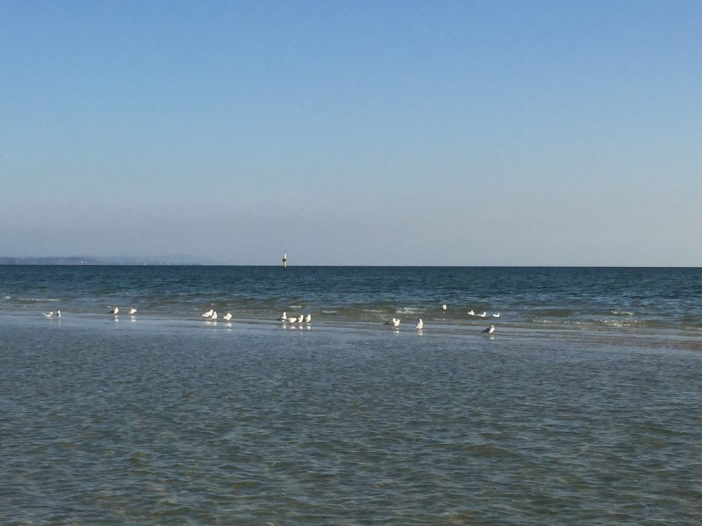 Seagulls on a sandbar hidden under the water