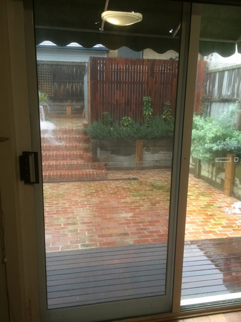 Looking out through our new back door.