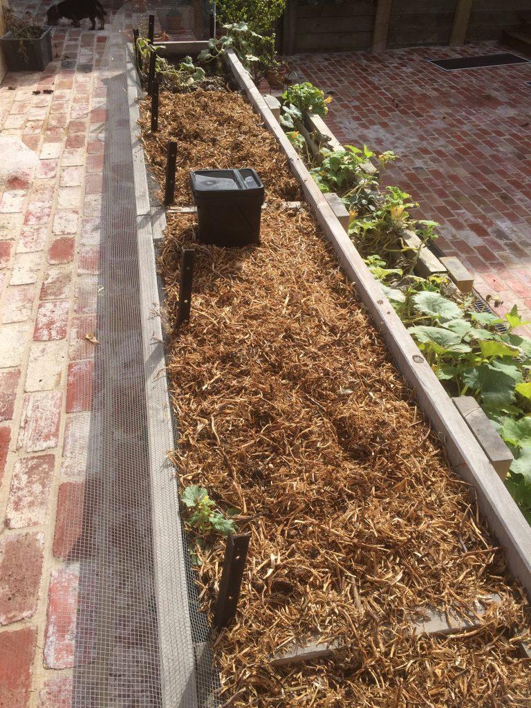 Un-netted veggie garden bed.