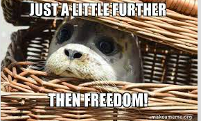 Otter in a basket: Just a little further then freedom.""