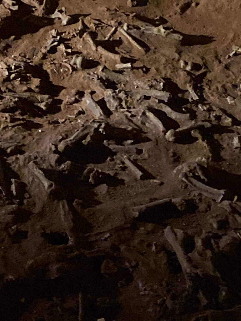 Bones scattered on the cave floor.