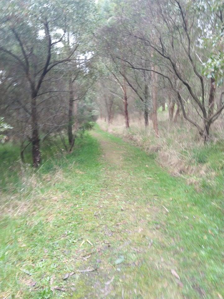 Track leading into the bush.