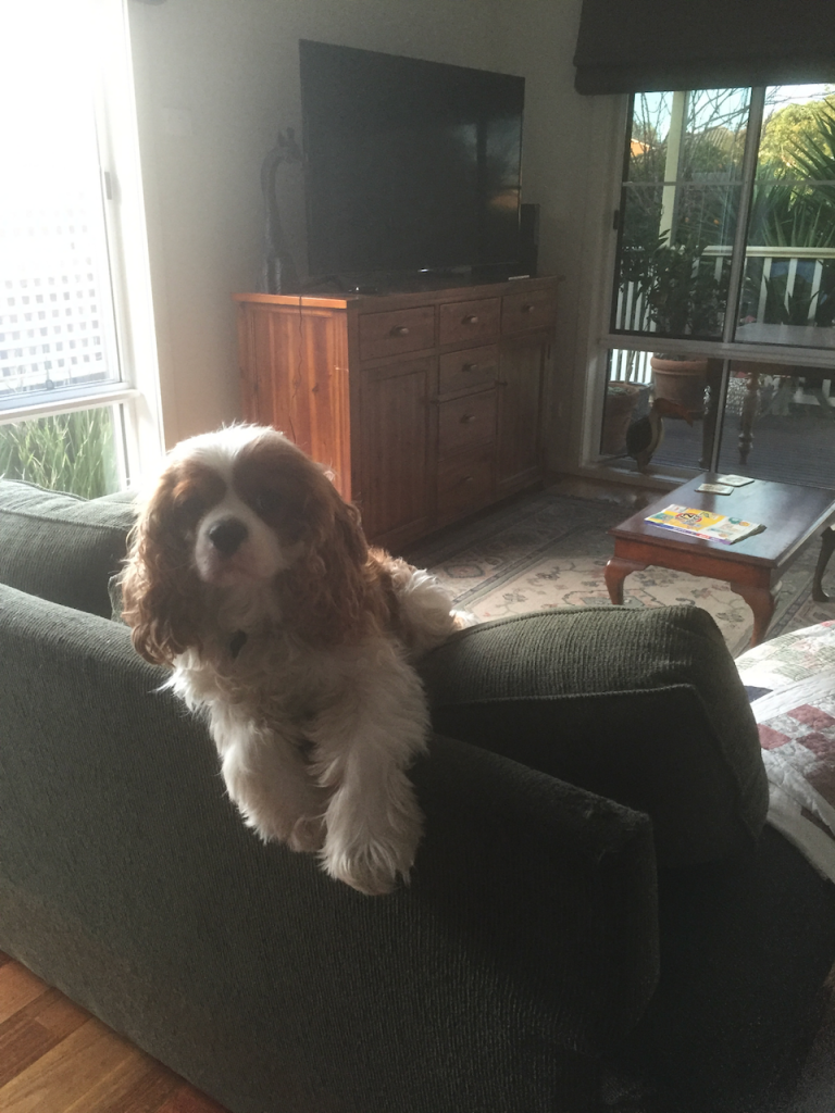 Dog on a couch.